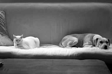 animalsbw1.jpg