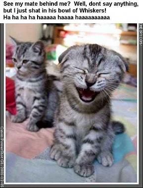 kitty_poop.jpg