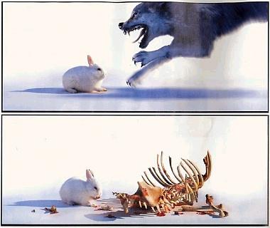 killerkonijn.jpg